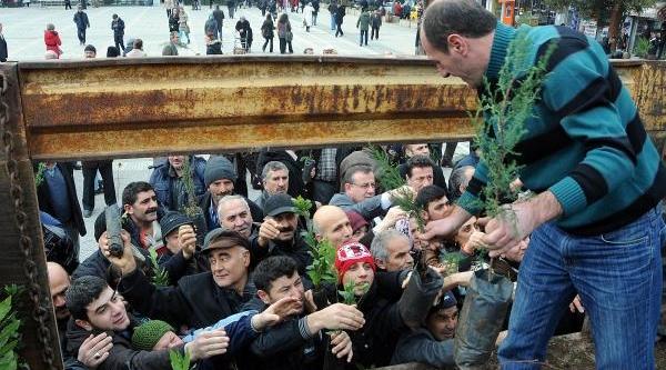 Samsun'da 4 Bin Fidan Dağitildi