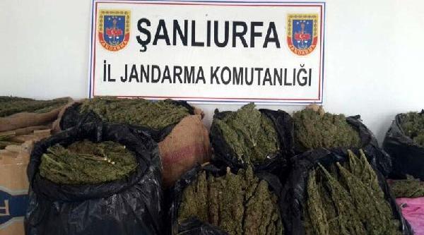 Şanliurfa'da 122 Kilo Esrara 5 Gözalti