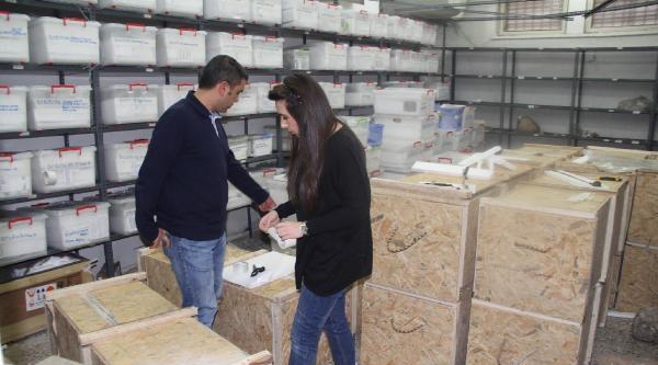 Şanliurfa'da 70 Bin Eser Yeni Müzeye Taşınıyor