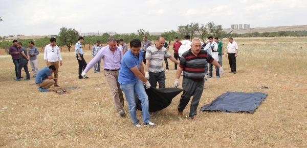 Şanliurfa'da Boş Arazide Erkek Cesedi Bulundu