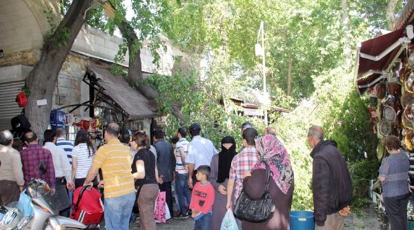 Şanliurfa'da Devrilen Dut Ağacı Paniğe Neden Oldu