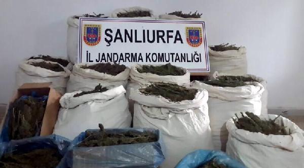 Şanliurfa'da Esrar Ve Kaçak Sigara Operasyonu