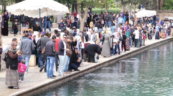 Şanliurfa'da Kaçak Balık Yemleri İmha Edildi