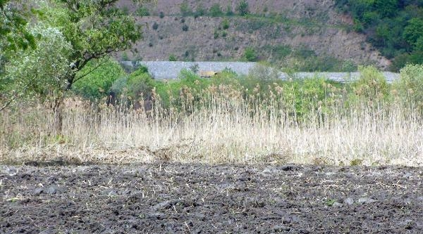 Sapanca Gölü Kıyısında Yanan Sazlık Alanı Traktör İle Sürüp Tarla Yaptılar
