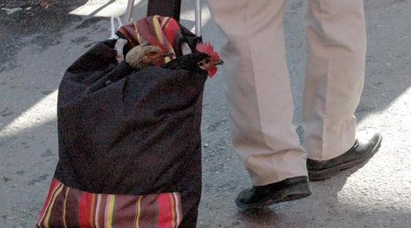Satin Aldiği Horozlari Pazar Arabasinda Taşidi
