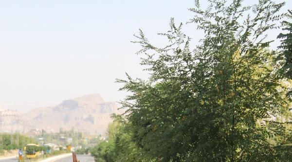 Şengal'e Dikkat Çekmek İçin 120 Kilometre Yürüdüler