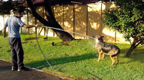 Sıcaktan Bunalan Köpek Hortumla Islatilarak Serinledi