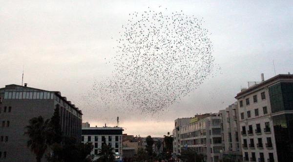 Siğircik Kuşlari Ilgiyle Izlendi