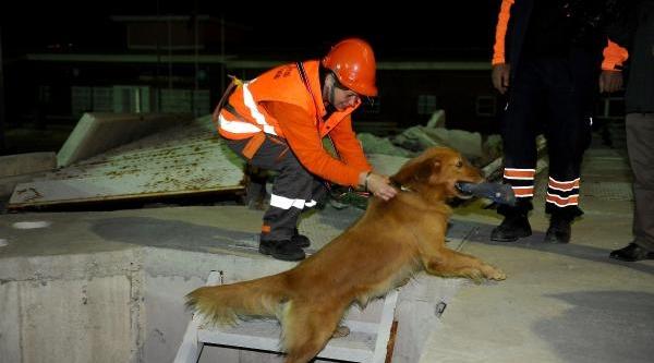 Sokak Köpeği 'rüzgar' Hayat Kurtaracak