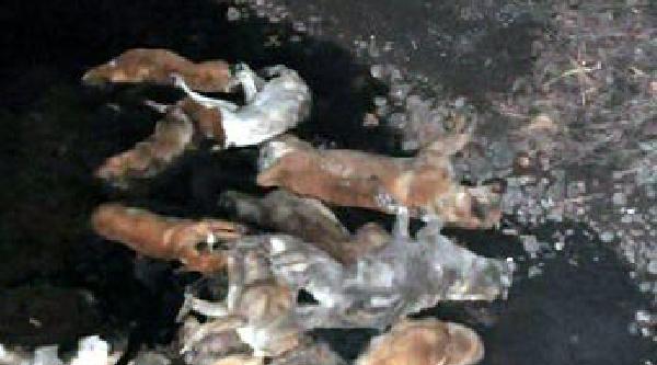 Sokak Köpeklerini Katledip Dereye Atmişlar
