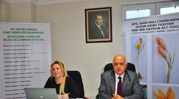 Spil'in 14'üncü Endemik Türü 'safran' Oldu