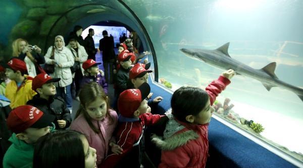 Sualtı Dünyası'ndaki Köpek Balığı 4 Yavru Doğurdu