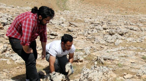 Suriye Sınırında Bulanan 'çöl Varanı' Doğaya Bırakıldı
