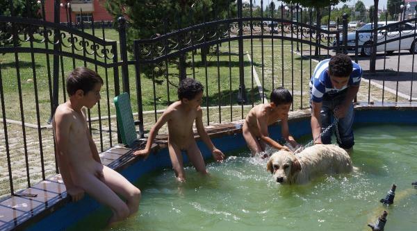 Süs Havuzunda Serinleyen Çocuklar Ve Çomar