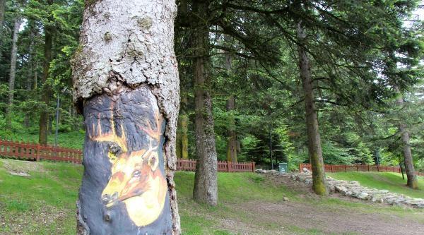Tabiat Parkında Ağaçlar Tuvale Döndü