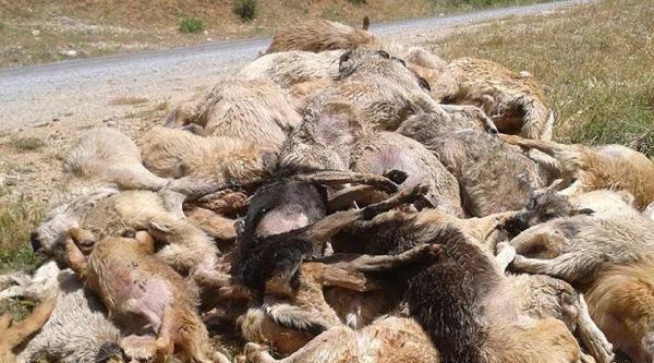 Tarsus'ta Köpek Katliamı