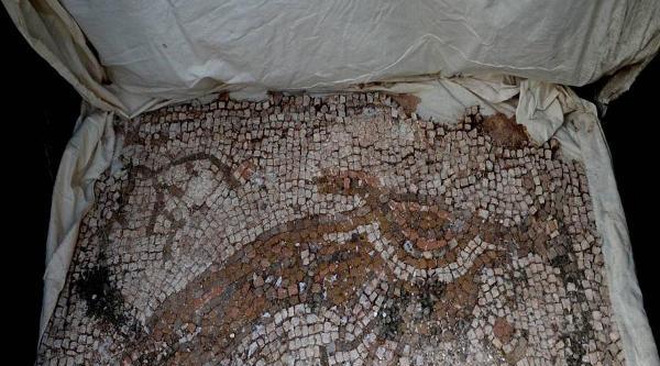 Tavus Kuşu Resimli Mozaiği Jandarma Kurtardı