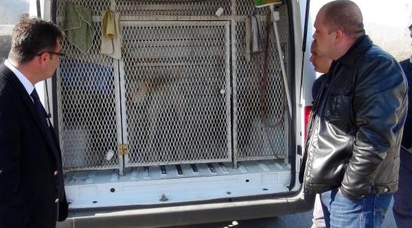 Tehlikeli Köpeğe El Konuldu, Sahibine Para Cezasi Verildi