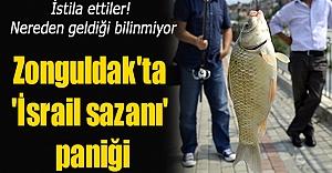 Zonguldak'ta 'İsrail sazanı' paniği