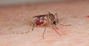 Zika virüsü yayılıyor