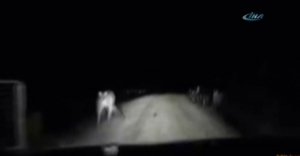 Kanguru otomobile böyle saldırdı