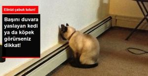 Hayvanların Başlarını Duvara Yaslamaları Ciddi Sorunların Habercisi
