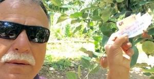 Hamile eşi için aldı, parasını ağaca astı