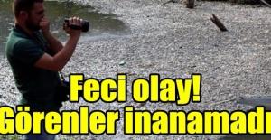 Bolu'da çevre katliamı! Görenler gözlerine inanamadı
