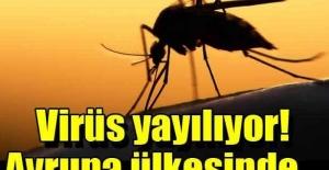 İsviçre'de Zika virüsü tehdidi