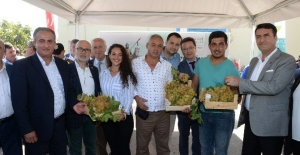 Bursa'da üzümler görücüye çıktı