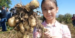 Patatesin saça faydalar neler? Patatesli saç maskesi nasıl yapılır?
