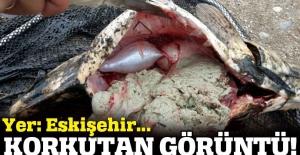 Eskişehir'deki balık ölümleri araştırılıyor