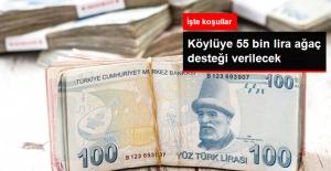 Köylüye 55 Bin Lira Ağaç Desteği Verilecek