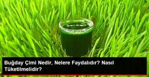 Buğday çimi nedir, nelere faydalıdır? Nasıl tüketilmelidir?