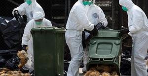 Tokat'ın Reşadiye ilçesine bağlı Doğantepe köyünde kuş gribi virüsü tespit edildi