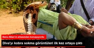 Bülent Ersoy#039;u Kobra Sokma Anları...