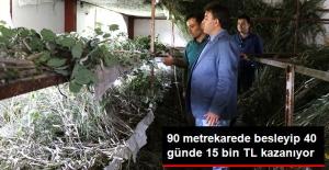 İpek Böceğinden 40 günde 15 Bin TL Kazanıyor