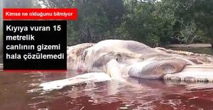 Kimse Ne Olduğunu Bilmiyor! Kıyıya Vuran 15 Metrelik Devasa Yaratık 3 Gündür Bekliyor