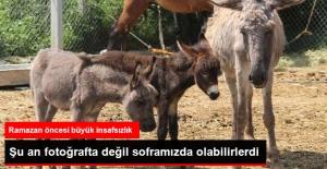 Testereli At ve Eşek Kasaplarına Şok Baskın: 13 Eşek, 3 At ve 3 Sıpa Kurtarıldı