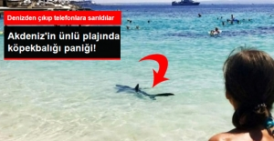 Akdeniz'in Ünlü Plajında Kıyıya Yanaşan Köpekbalığı Paniğe Neden Oldu