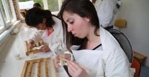 Ordu'da hayata geçirilen projeyle arı sütü hasadını ev hanımları yapıyor