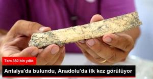 Antalya'da 350 Bin Yıllık Anadolu'da Görülmeyen Kemik Parçaları Bulundu