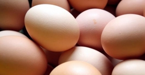 Bakanlıktan zehirli yumurta incelemesi