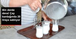 Eşek Sütünü Çay Bardağında 20 TL'den Satıyor
