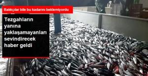 Fiyatlar Düşecek! Karadeniz'de Palamut ve İstavrit Bereketi