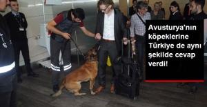 Türk Yolcuları Köpekle Arayan Avusturya'ya, Atatürk Havalimanında Aynen Cevap Verildi