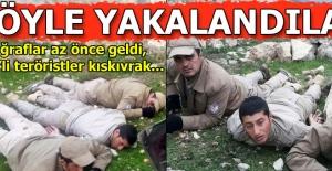 Son dakika... 3 PKK'lı daha yakalandı!
