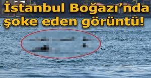 İstanbul Boğazı'nda şoke eden görüntü!