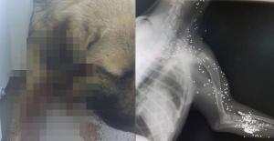 Ağlayan Köpeği Veterinere Götürdüler...