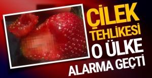 Çilek tehlikesi: Ülke alarma geçti!